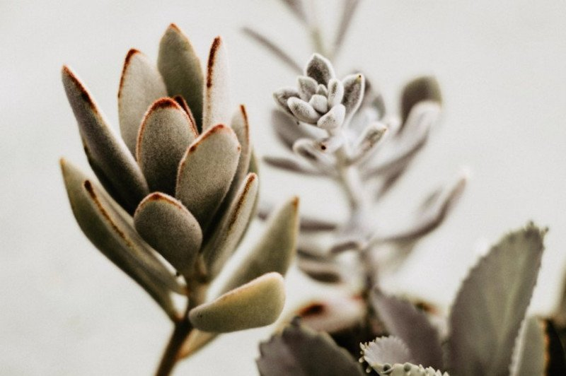 6 Quick Insights that Will Make You Understand Succulents