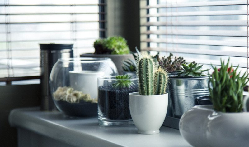This is the Way to Keep your Indoor Succulents Alive and Vivid